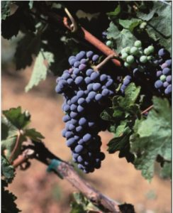 Read more about the article Waste Water Treatment for Wineries