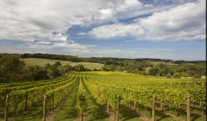 Read more about the article How Does Winery Wastewater Treatment Work?