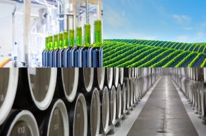 Read more about the article What is Winery Wastewater?