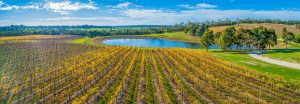 Read more about the article How to Remove Sludge from Your Winery Pond?