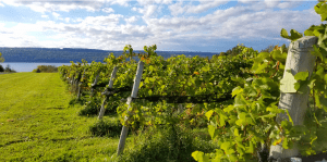 Read more about the article How Does A Winery Wastewater System Help Increase Capacity?